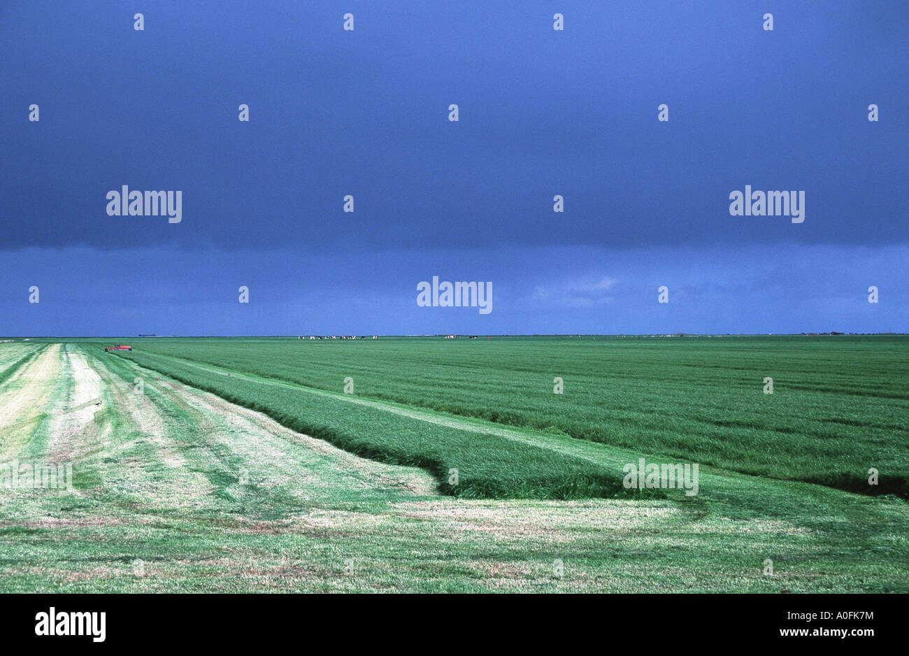 pastureland, partial swath, with dark sky, Netherlands, Frisia - Stock Image