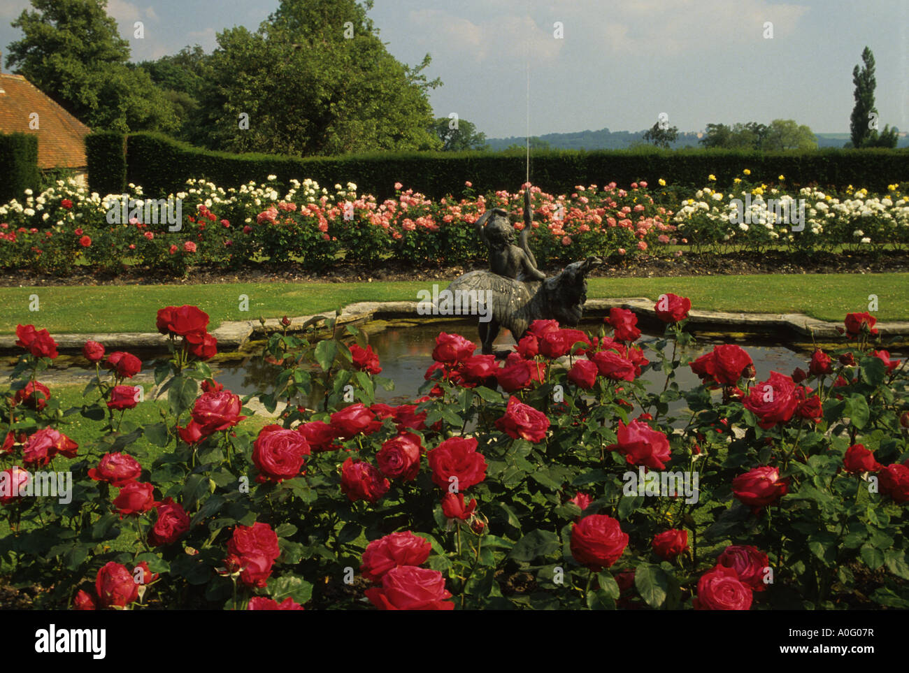 garden Hampshire Formal rose garden and fountain Rosa Alecs ...