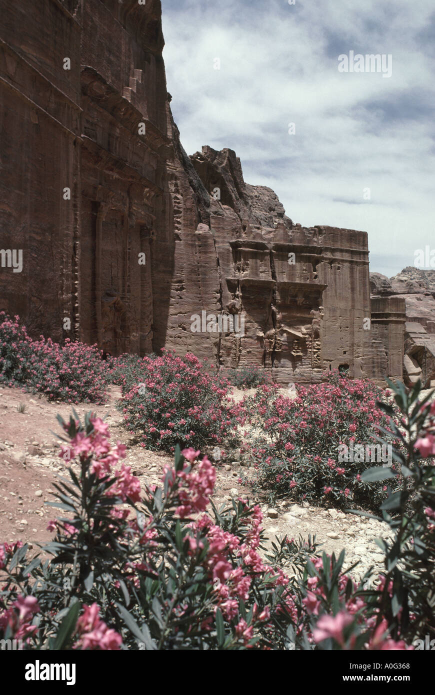 Pink oleander bushes in front of tomb carved into the face of mountainside in the rose red Nabataen city of Petra Stock Photo