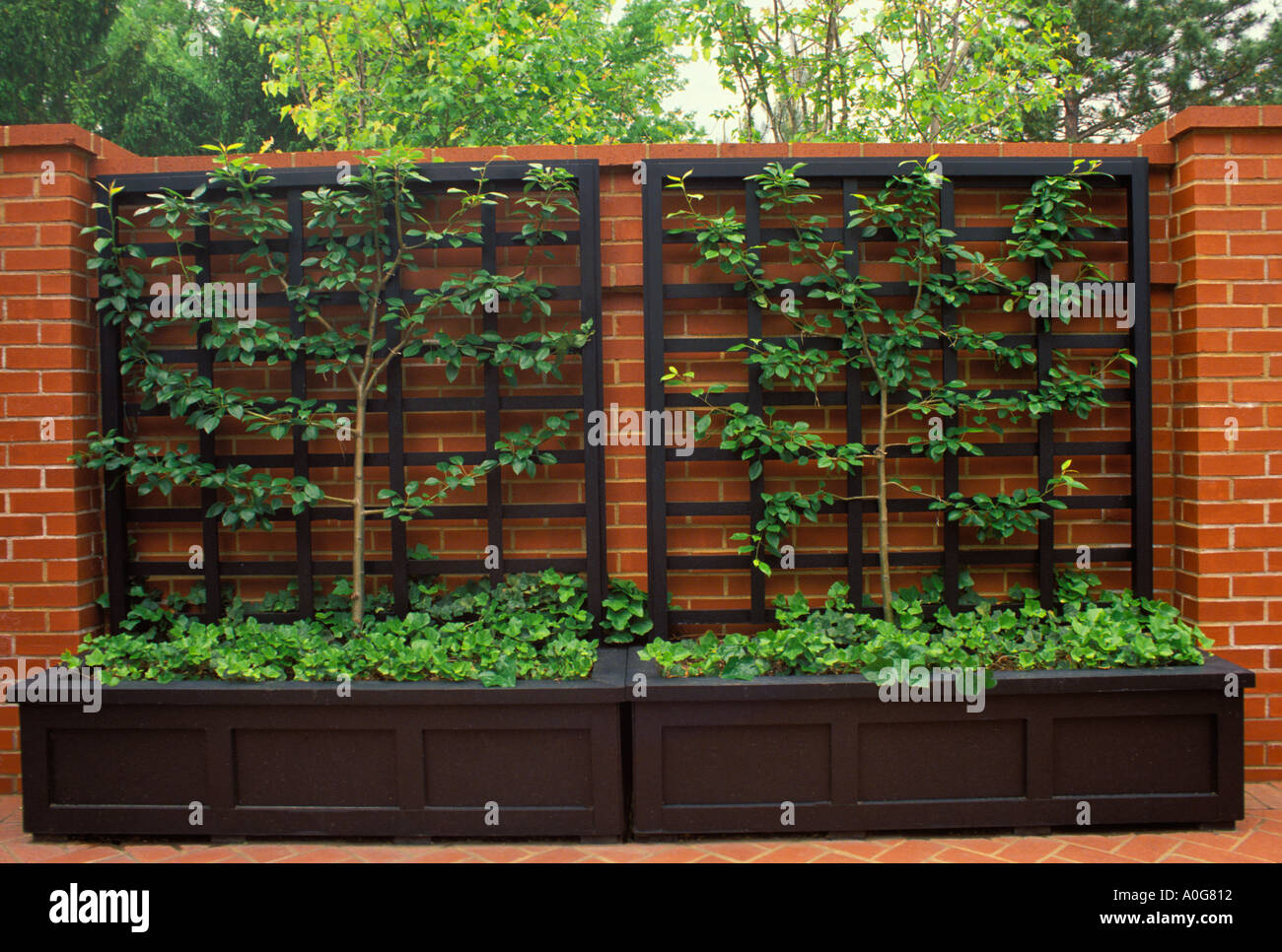 Formal Brick Courtyard Wall With Espaliered Pear Tree On