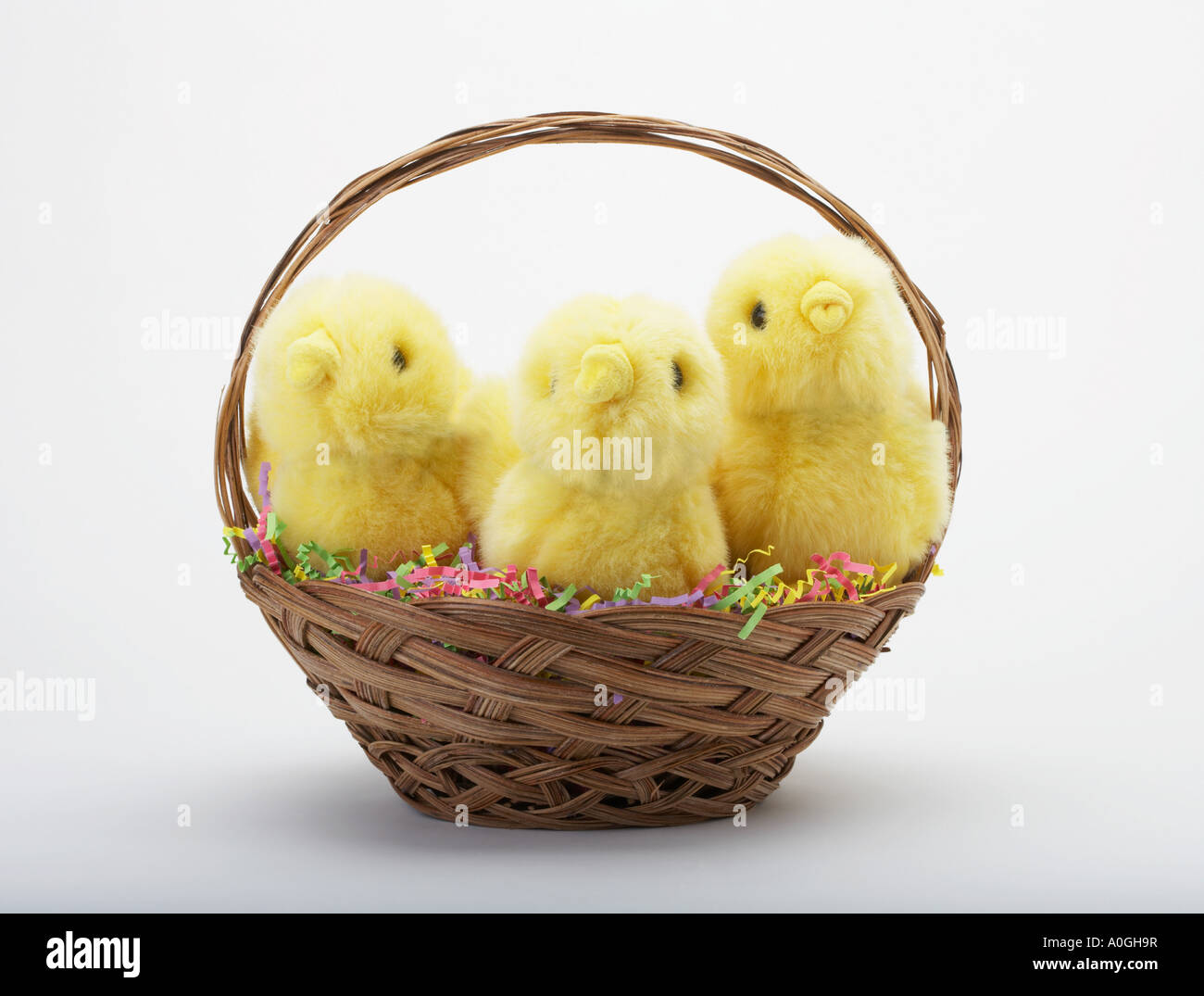 Easter chicks in a basket Stock Photo