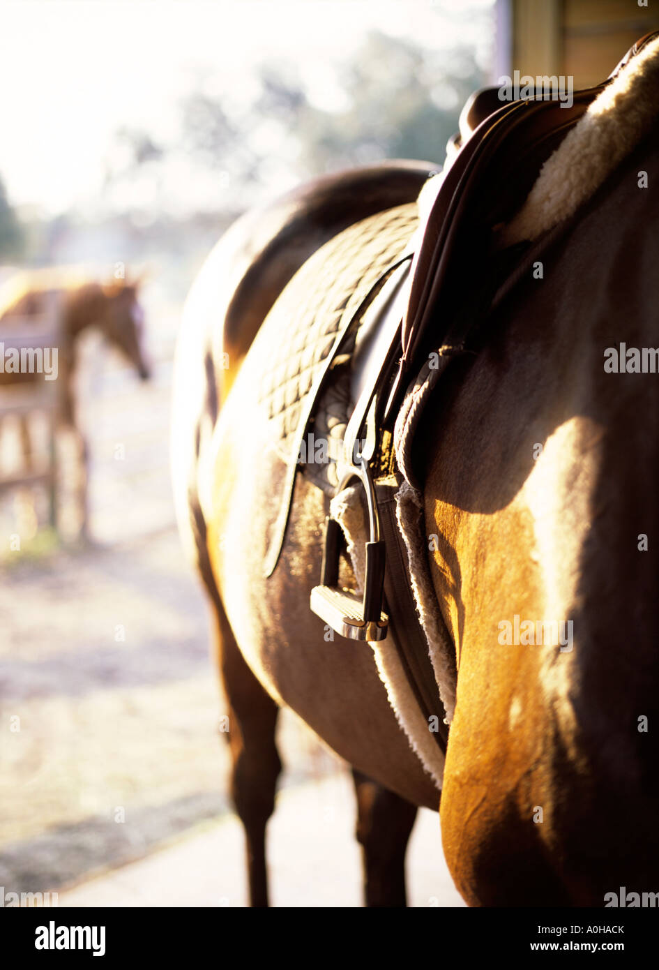 Waiting for a rider, a horse waits in the barn. - Stock Image
