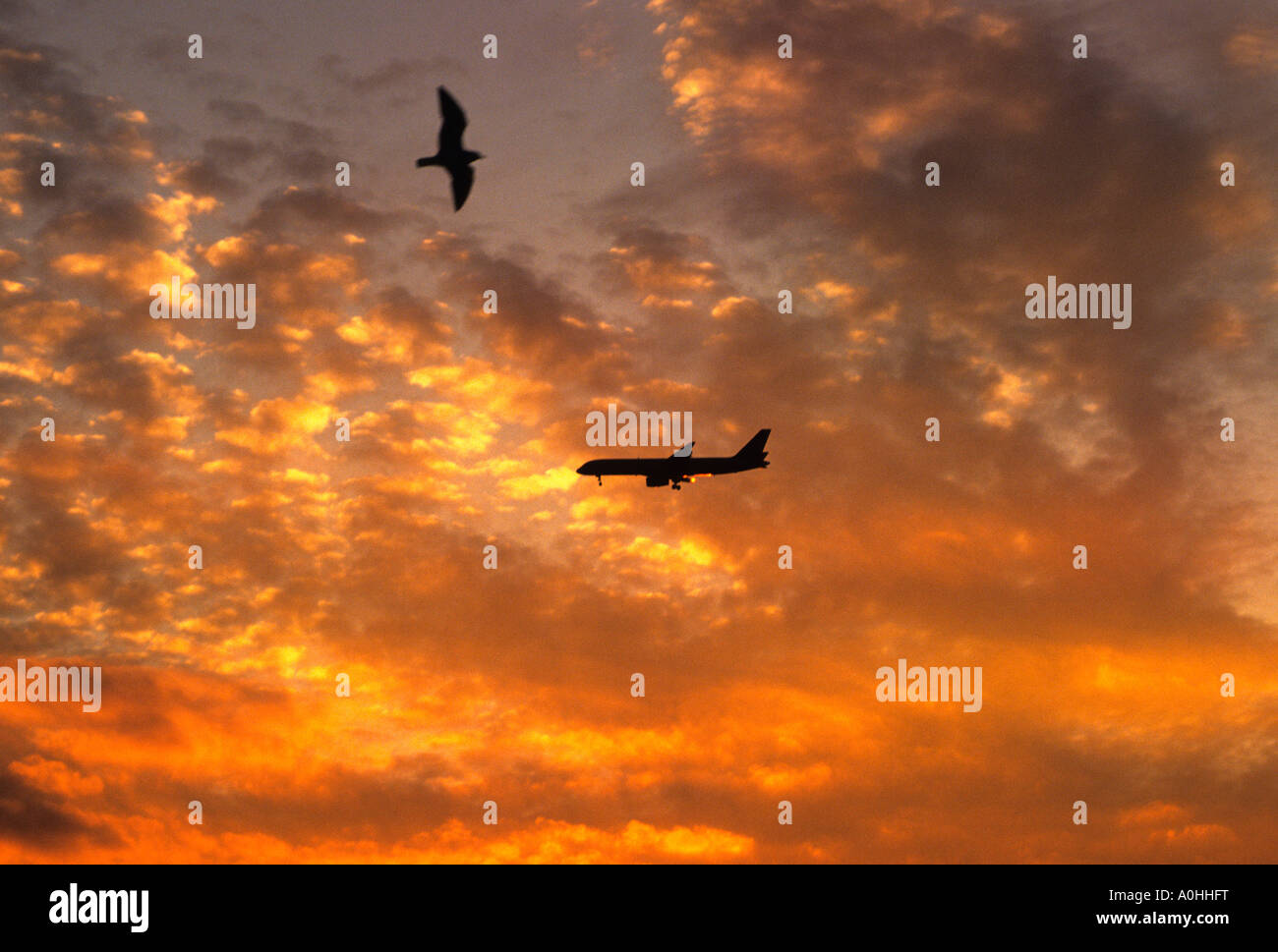 Airplane Plane Flying Against Colorful Clouds at Sunset Sandra Baker - Stock Image