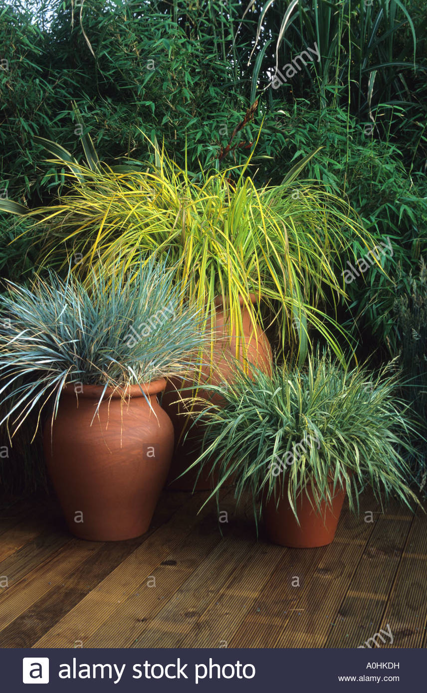Ornamental Grasses In Containers Hampton court 1995 design geoffrey whiten ornamental grasses in hampton court 1995 design geoffrey whiten ornamental grasses in pots containers on wooden decking workwithnaturefo