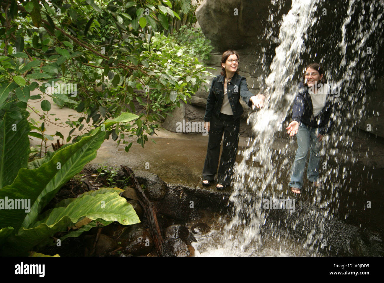cleveland ohio university circle cleveland botanical garden visitors artificial waterfall tropical plants stock image - Botanical Garden Cleveland