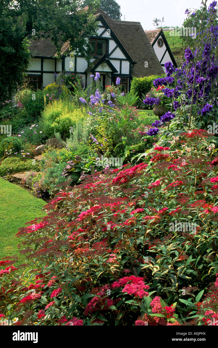 Glenn Cottage. Shropshire. Country cottage garden in summer. Herbaceous border - Stock Image