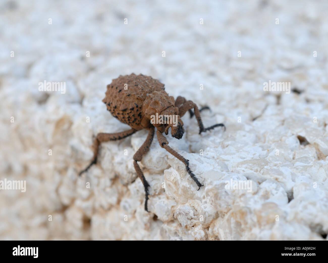 ugly bug ball dating uk