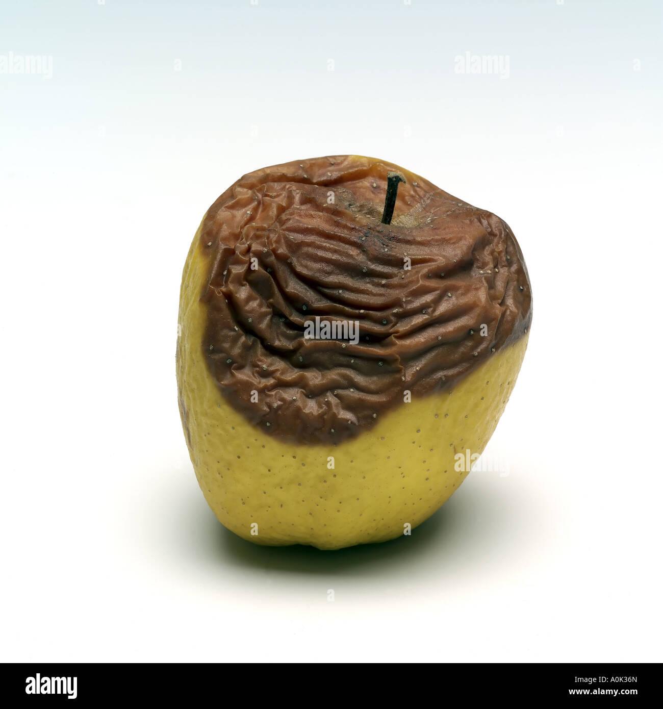 Rotten Golden Delicious apple - Stock Image