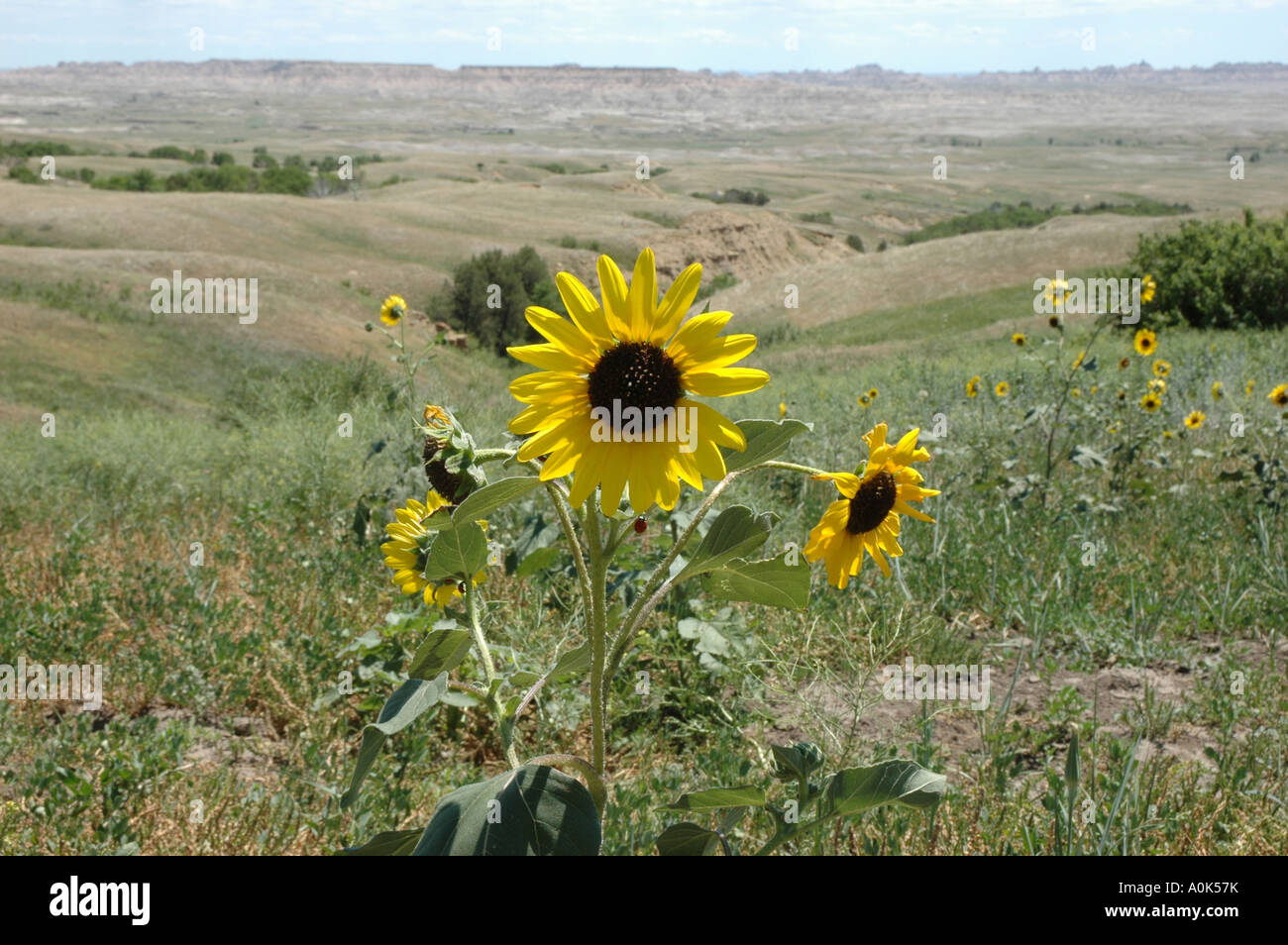 P31 092 Badlands National Park Near Roberts Prairie Dog Town Stock