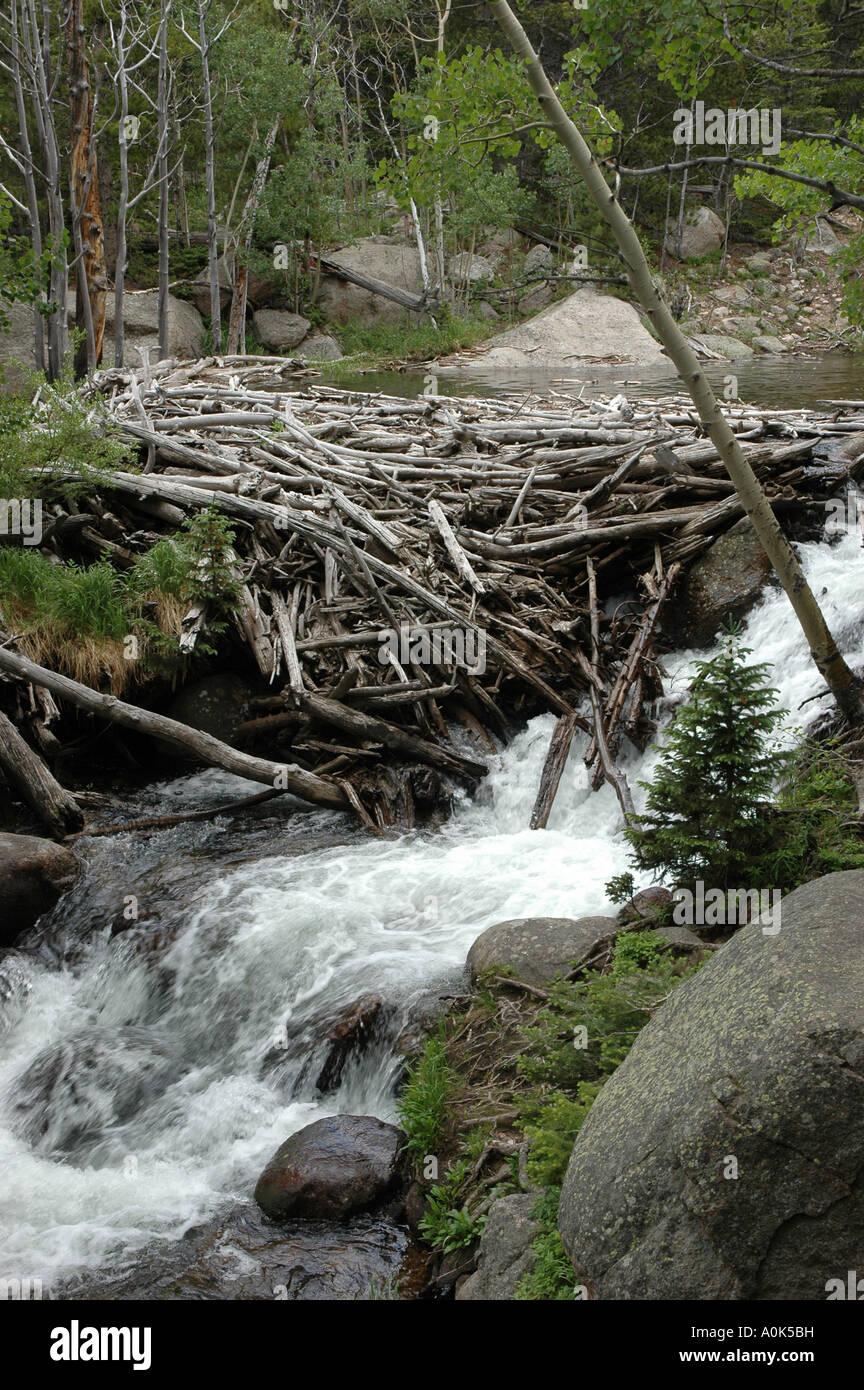 P31 126 Rocky Mountain National Park - Log Damn In Glacier Creek - Stock Image