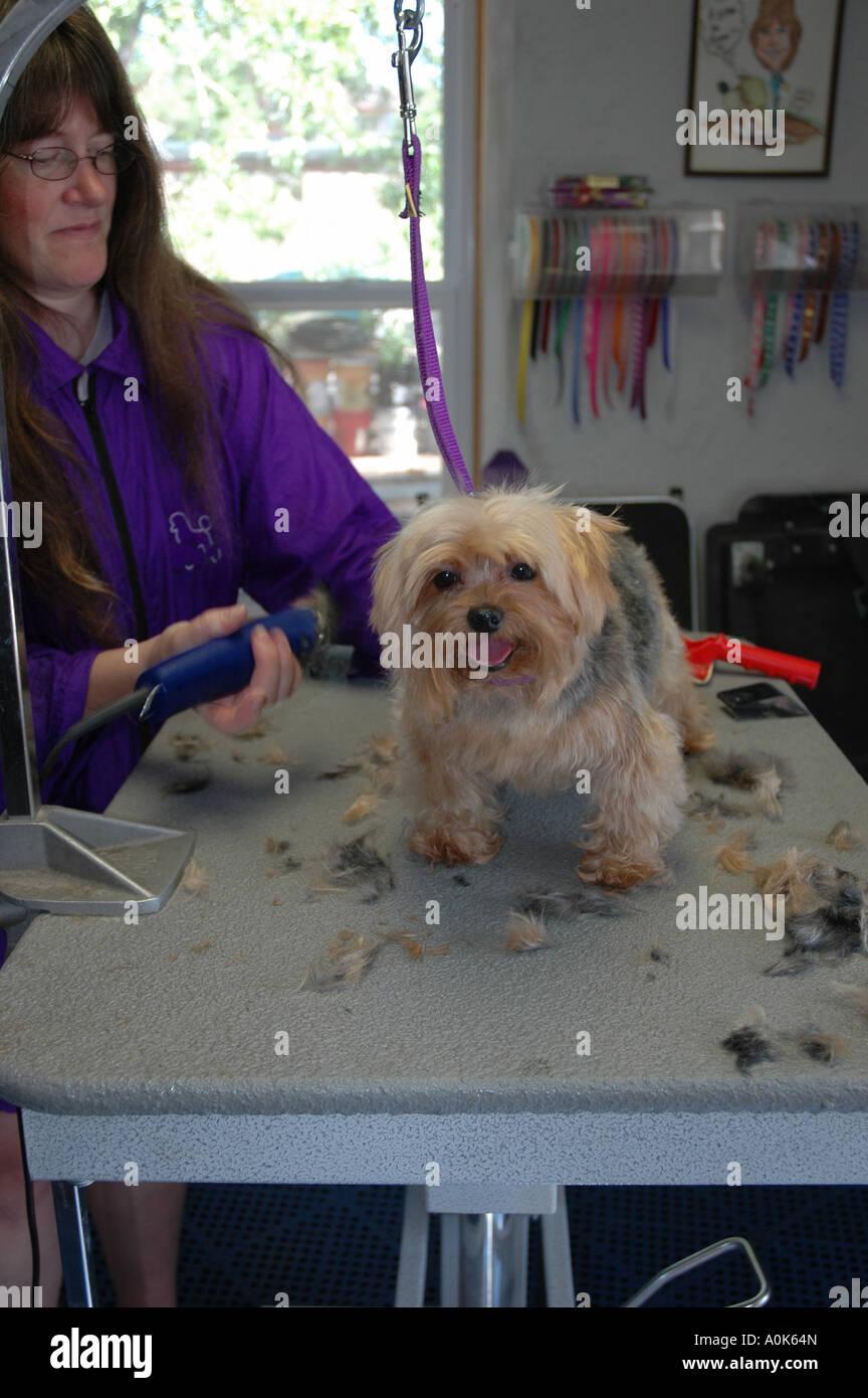P31 278 Dog Grooming 1 - Stock Image