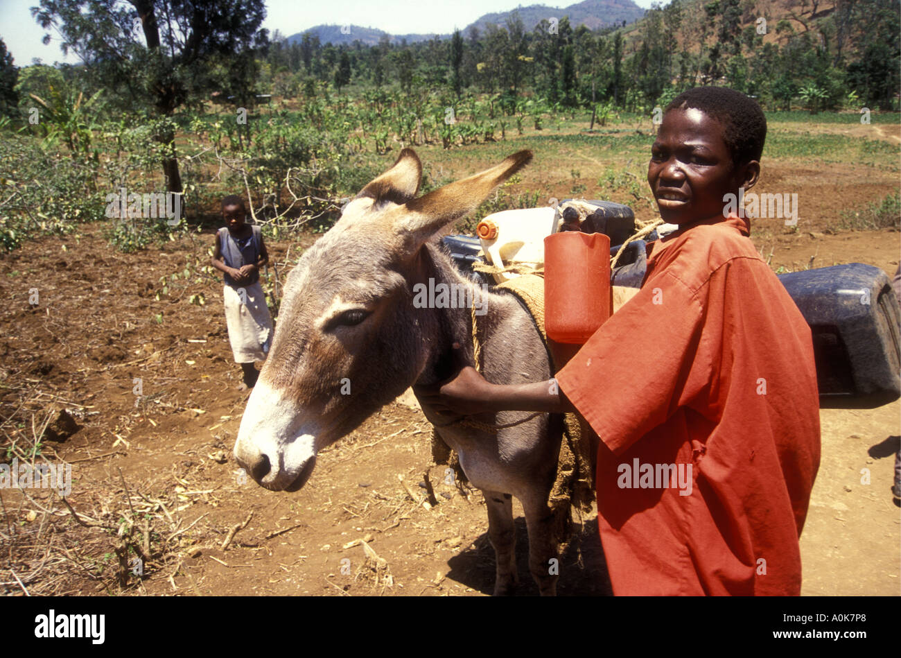 Young Meru boy fetching water with a donkey Meru District Kenya East Africa - Stock Image