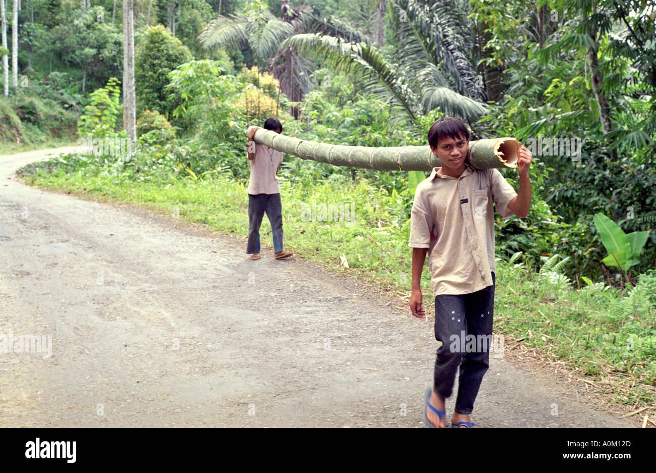 Two boys carrying a large bamboo pole in Tana Toraja Torajaland Sulawesi Celebes Indonesia - Stock Image