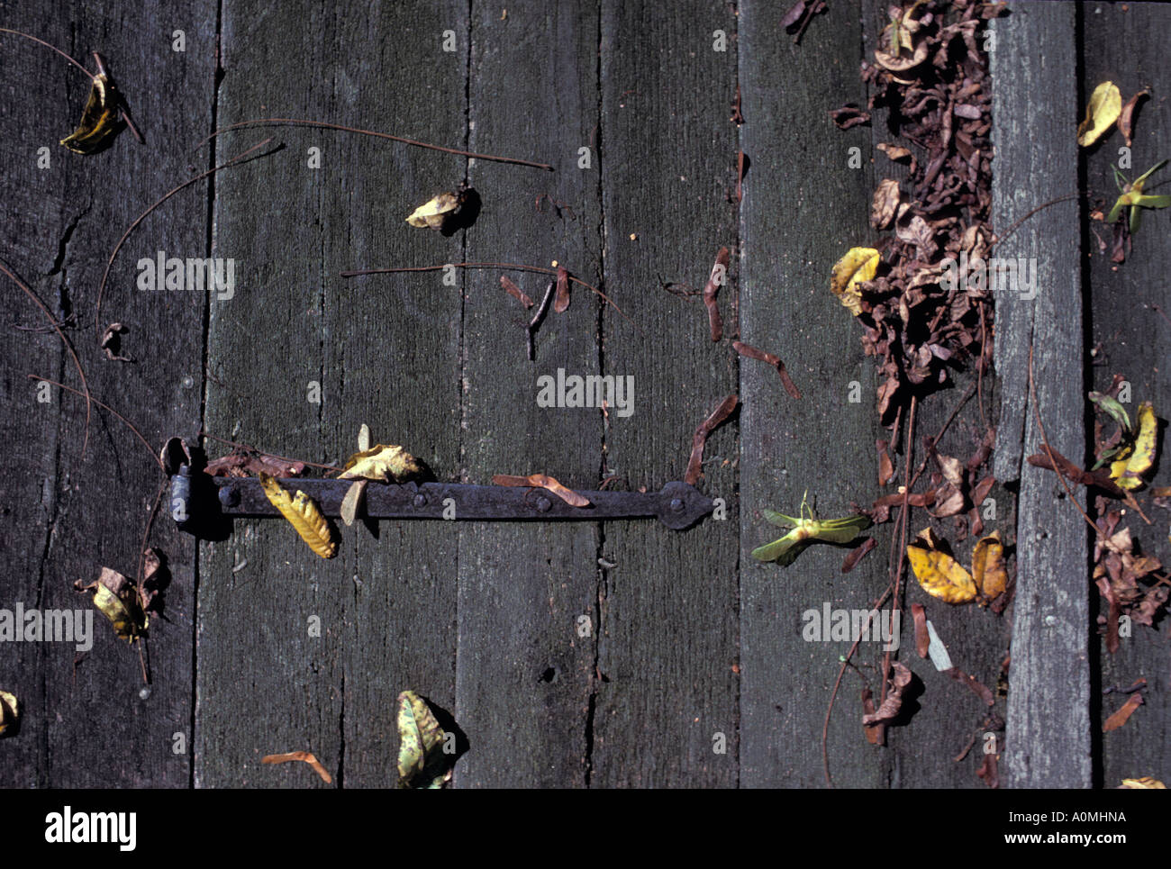 close up detail weather weathered wooden wood door leaves leaf autmn fall seasonal iron metal lock hinge Stock Photo