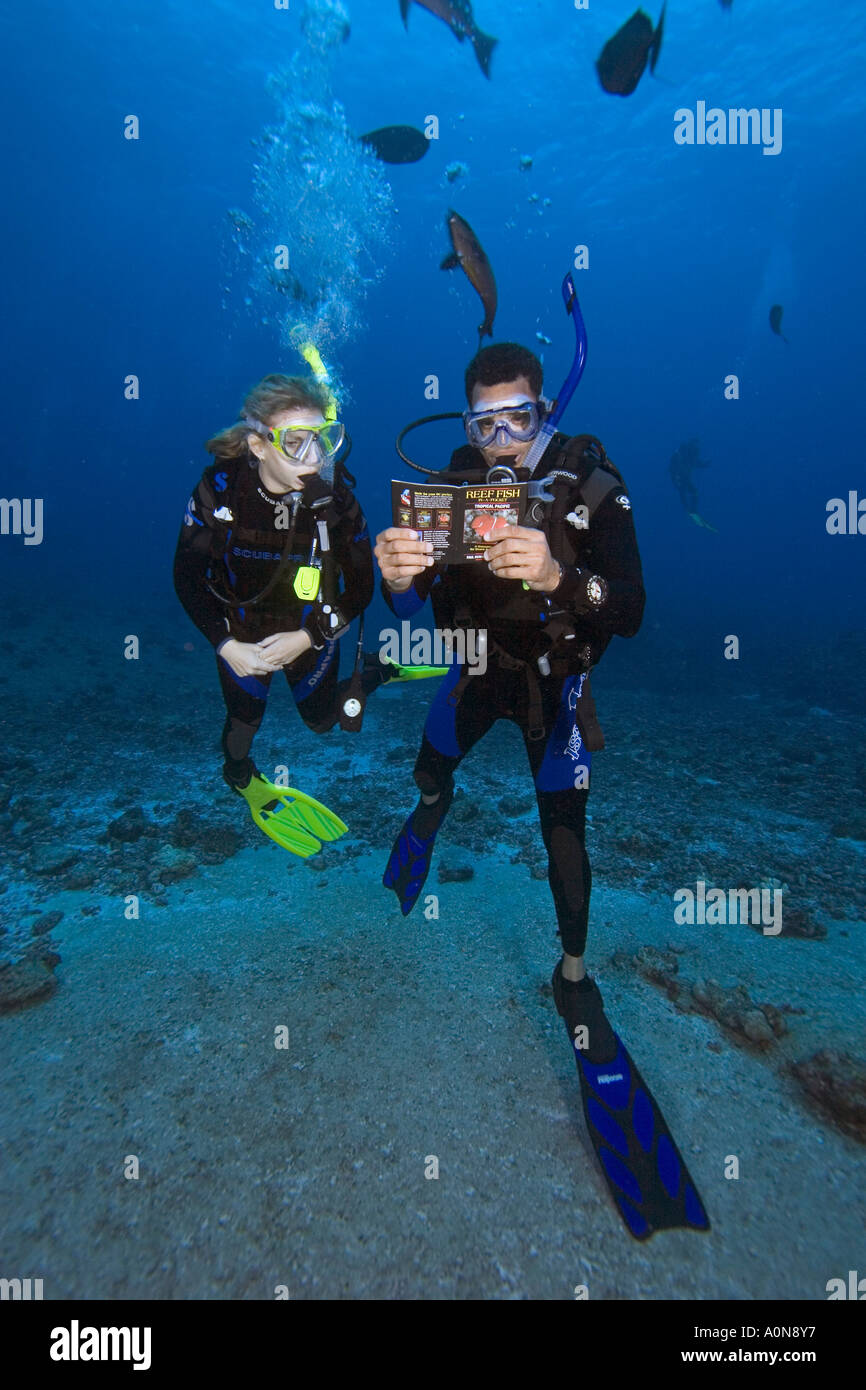 Divers (MR) on a reef reading a fish identification book underwater, Palau, Micronesia. - Stock Image