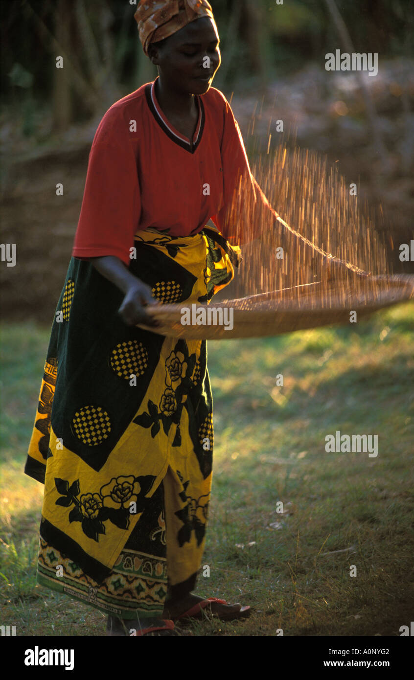 Kagera a woman using a technic to separate the skins from the coffee beans - Stock Image