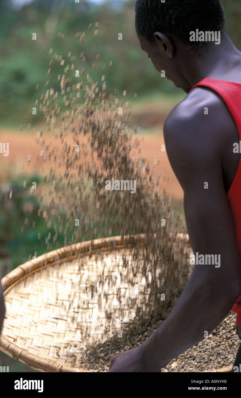 Kagera a man using a technic to separate the skins from the coffee beans - Stock Image