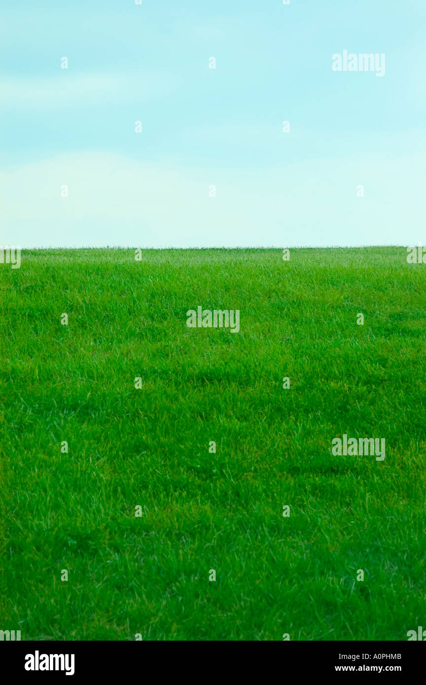 Green Grass, Blue Sky - Stock Image