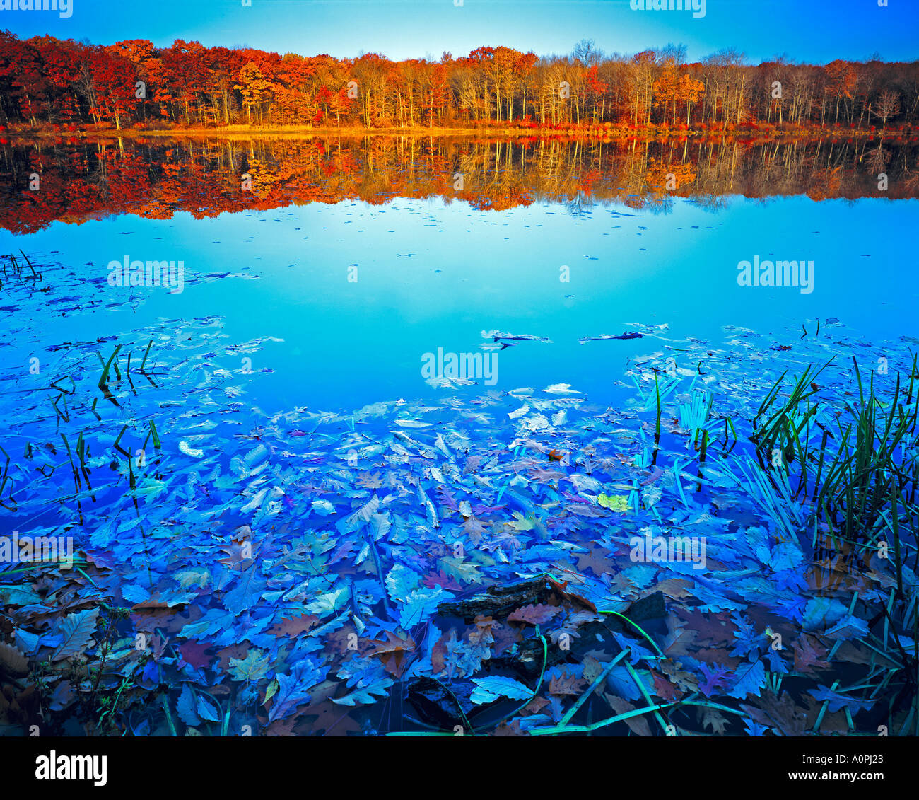 Autumn Color Reflections Stokes State Forest Appalachian Mountains New Jersey - Stock Image