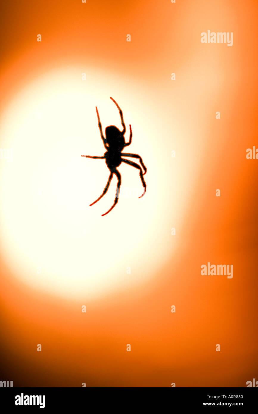 garden spider araneus diadematus in back light of a street lamp digital treated - Stock Image