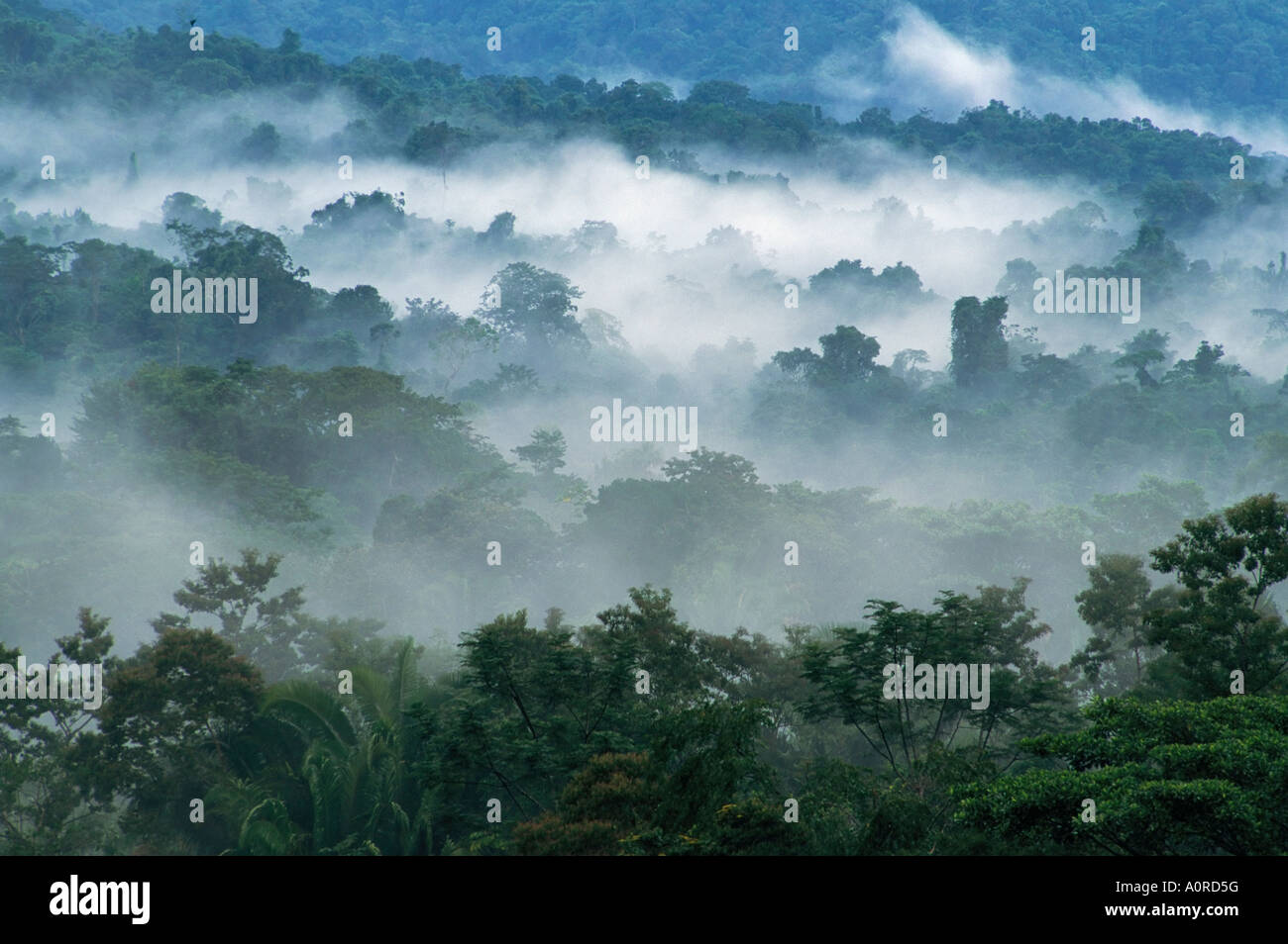 Rain forest from Lubaantun to Maya Mountains Belize Central America - Stock Image