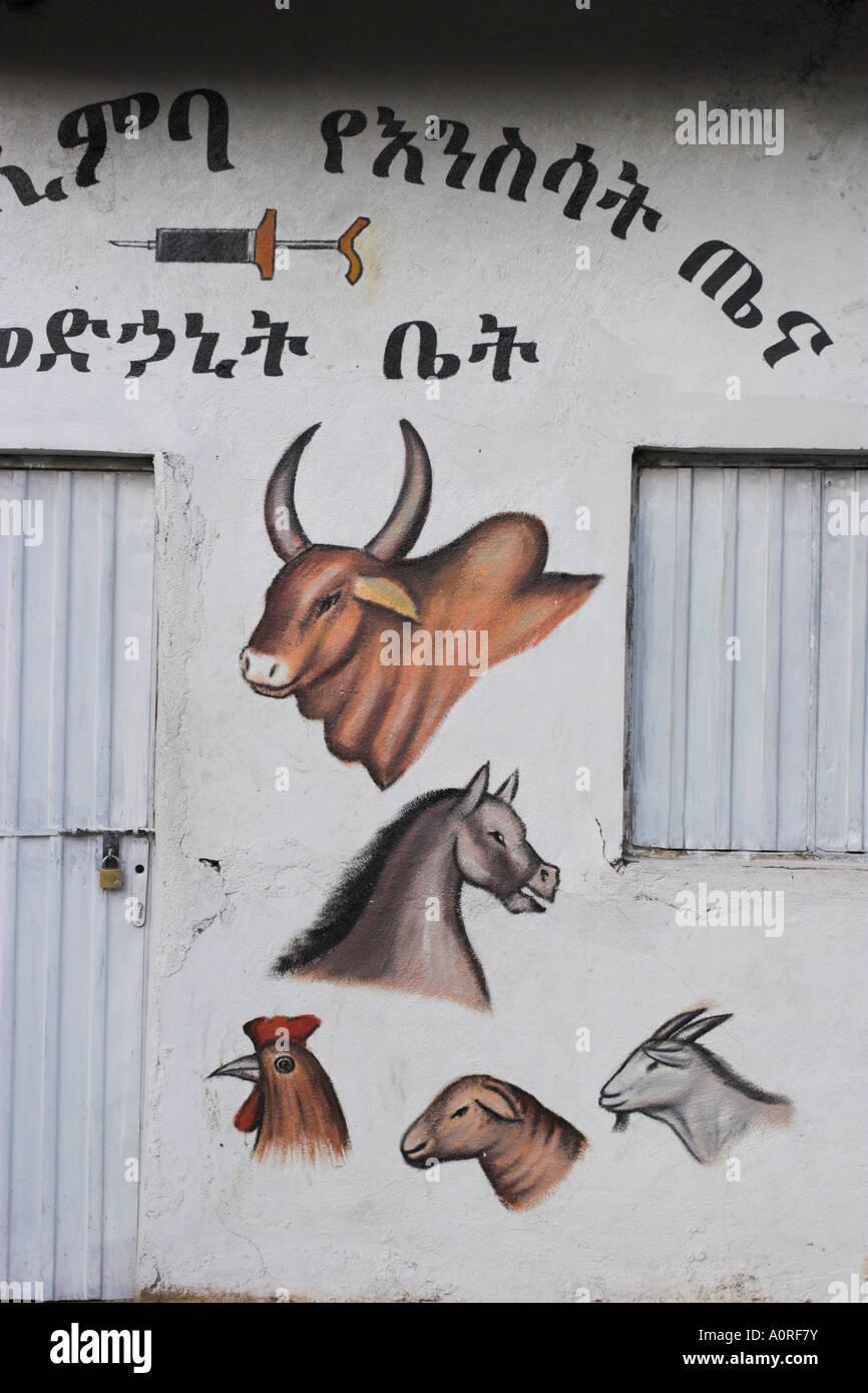 Veterinary practice Lower Omo Valley Jinka Ethiopia Africa - Stock Image