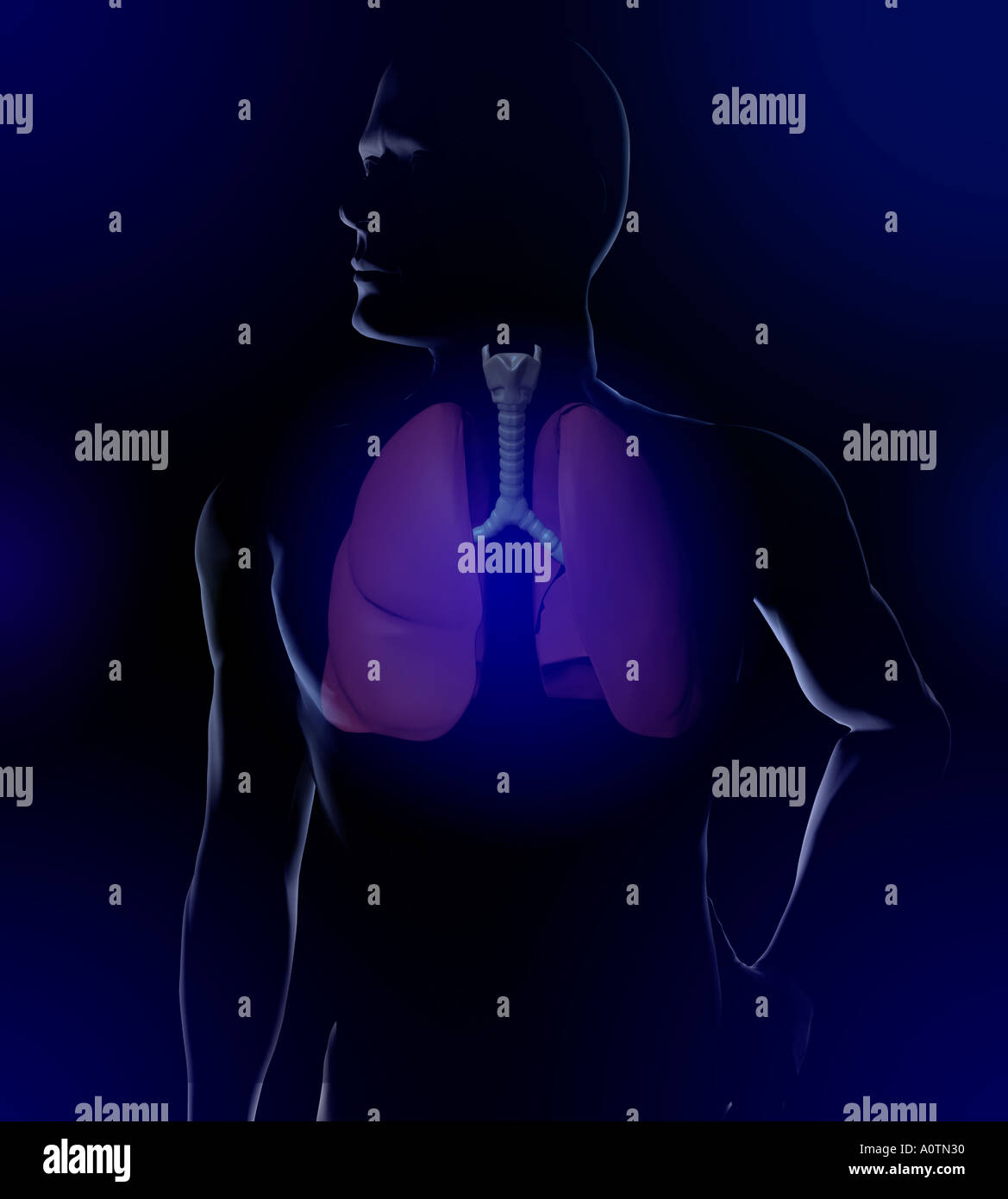 illustration of man and Upper Respiratory - Stock Image