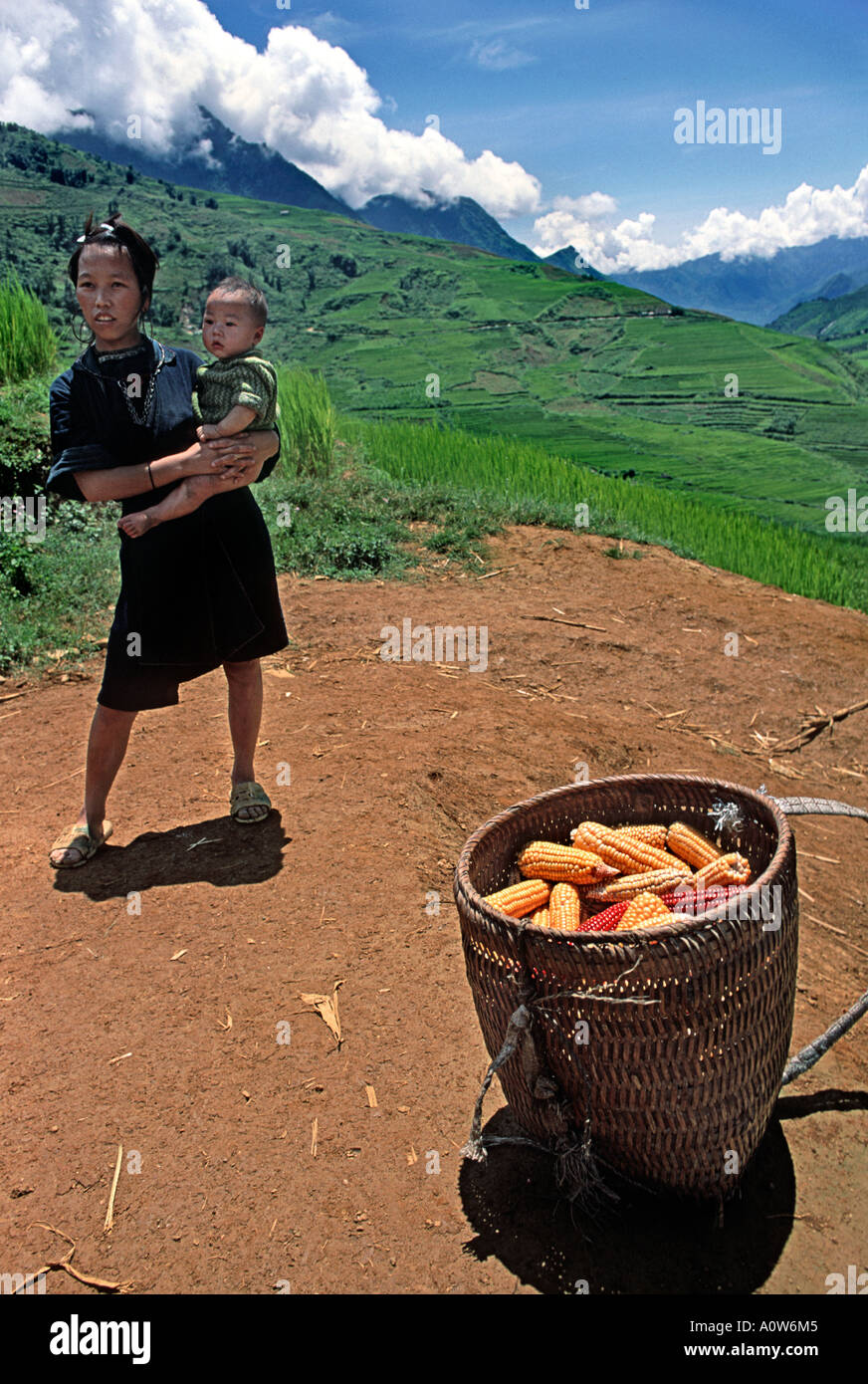 Hilltribe woman from the Hmong group standing with baby beside a basket of maize cobs and surrounded by lush fields Sapa Vietnam - Stock Image