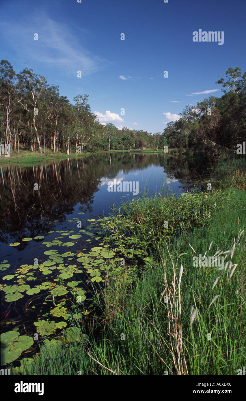 Reeds and forests frame a lagoon at Deepwater National Park near the coastal town of 1770, Queensland, Australia - Stock Image
