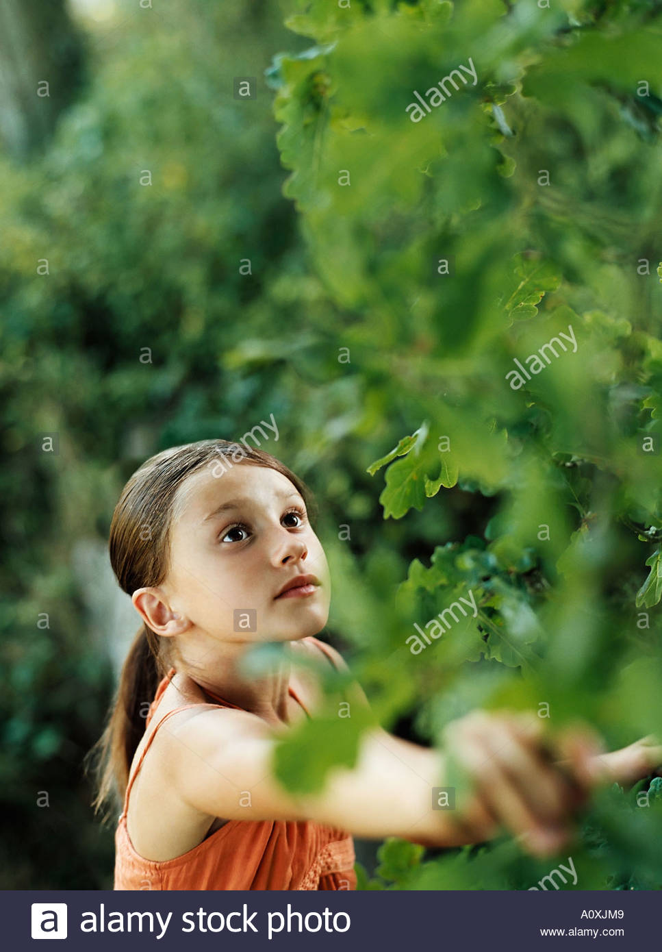 Girl looking at plant - Stock Image