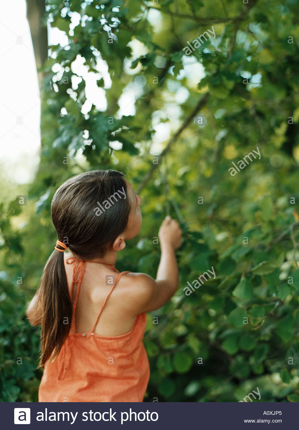 Girl looking up into tree - Stock Image