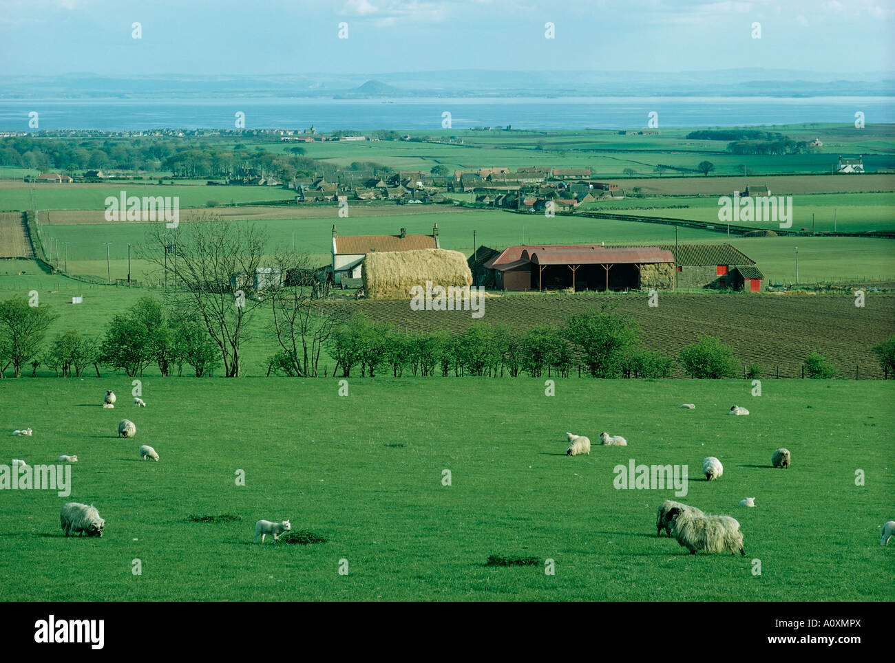 St Monage with Firth of Forth in the distance Fifeshire Scotland United Kingdom Europe - Stock Image