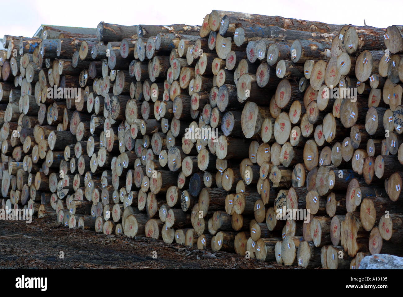 Timber exports from New Zealand. - Stock Image