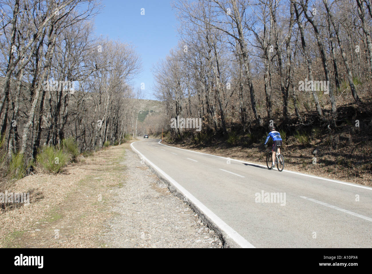 Cyclist on Tree-lined mountain road, Sierra de Guadarrama, Central Spain Stock Photo