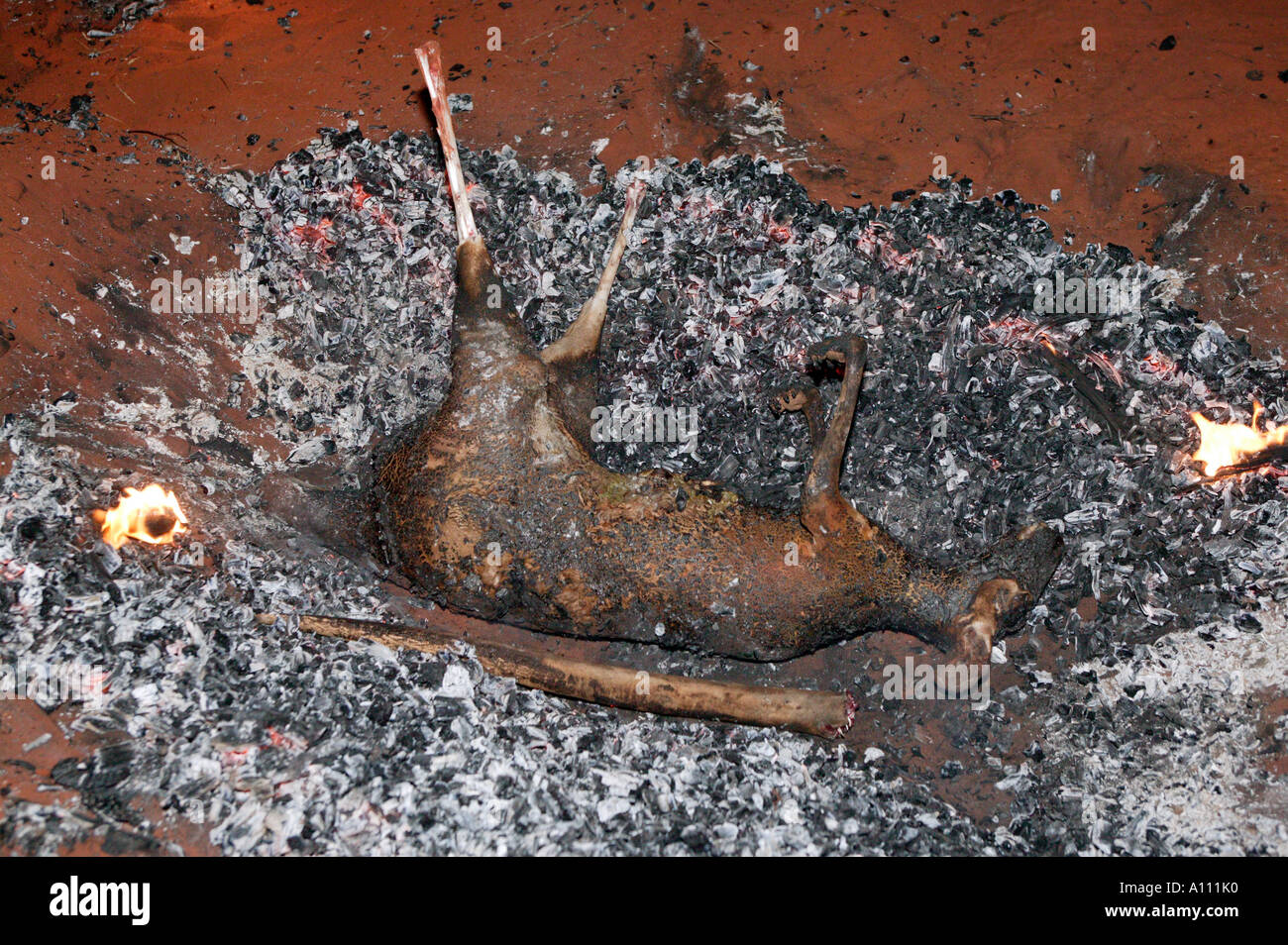 Kangaroo Cooking In Traditional Aboriginal Fire Pit Red