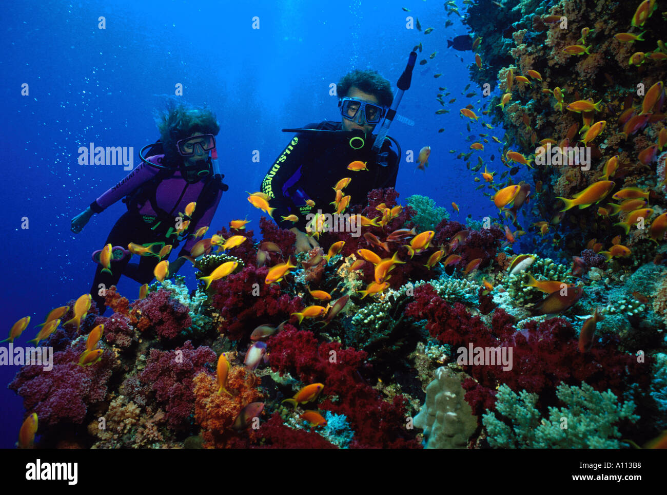 A PAIR OF SCUBA DIVERS GAZE AT A MULTI COLORED CLUSTER OF SOFT CORALS AND SCHOOLING GOLDEN ANTHIAS - Stock Image