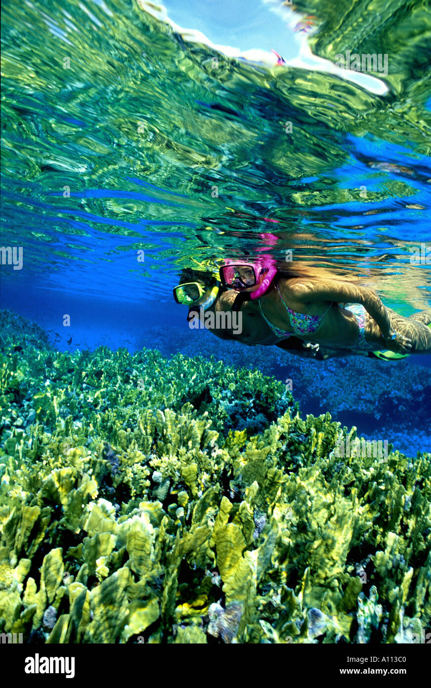 A PAIR OF SNORKELERS ON A REEF IN THE CLEAR WATERS OFF OF NEW PROVIDENCE IN THE BAHAMAS - Stock Image
