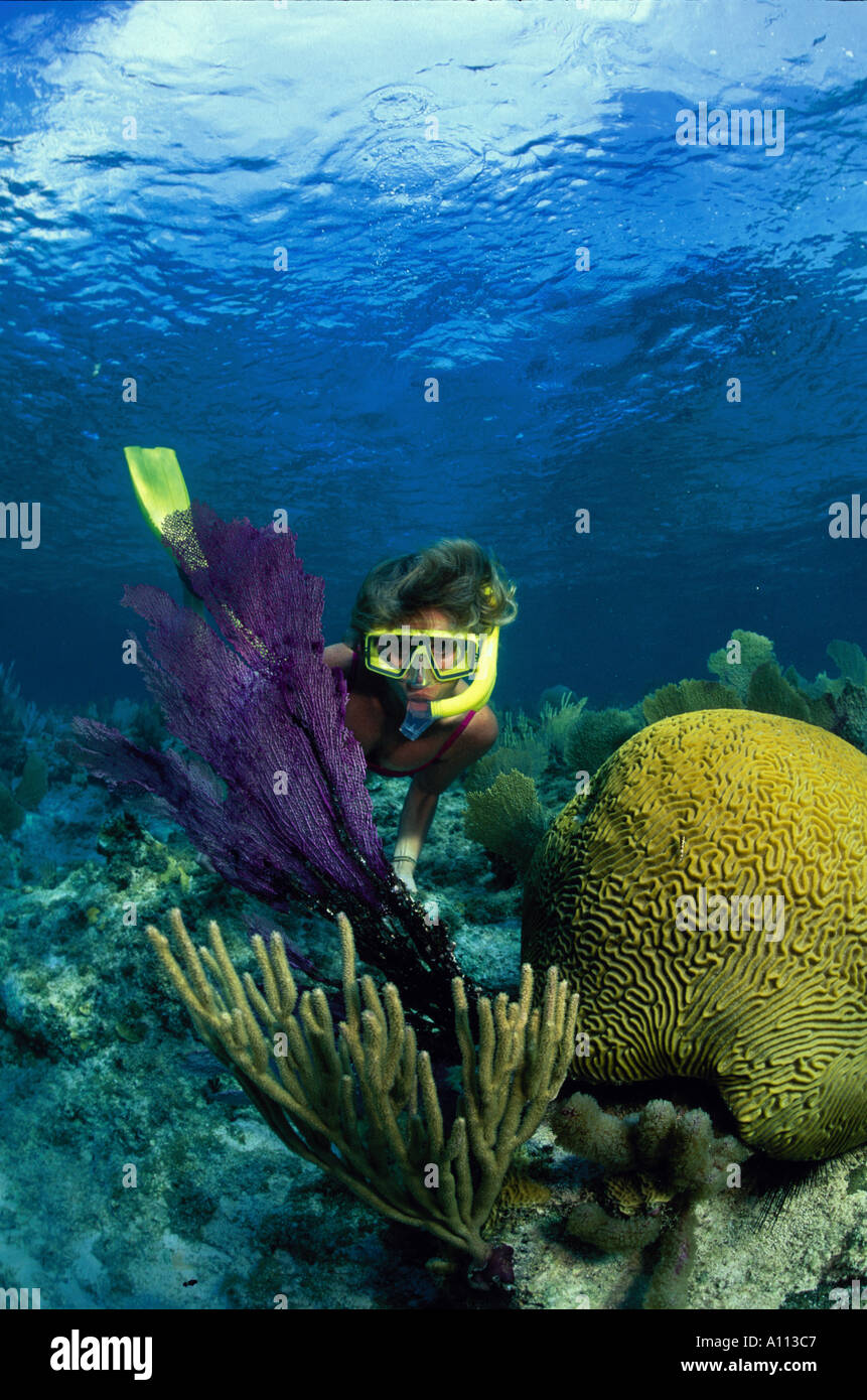 A FEMALE SNORKELER LOOKS CLOSELY AT A SEAFAN ON A CORAL REEF IN THE CAYMAN ISLANDS - Stock Image