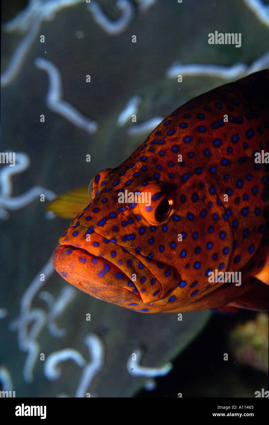 Orange Fish Lips Stock Photos & Orange Fish Lips Stock Images - Alamy