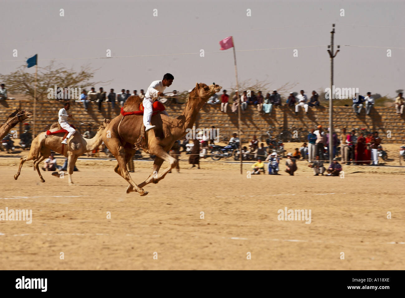 Camel Running Camel Race Track Stock Photos & Camel Running