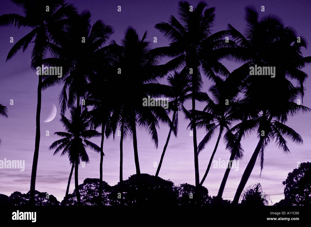 Palm trees at dusk with crescent moon Kiribati Central Pacific - Stock Image