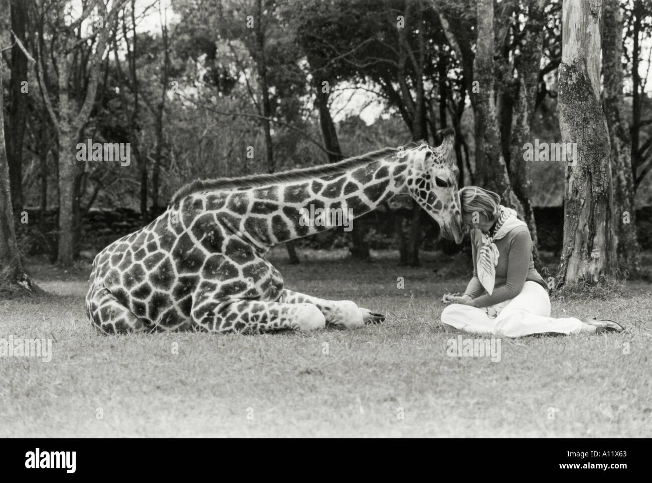 Betty Leslie Melville, writer and lecturer, with Marlon, a Rothschild giraffe in Kenya 1977 - Stock Image