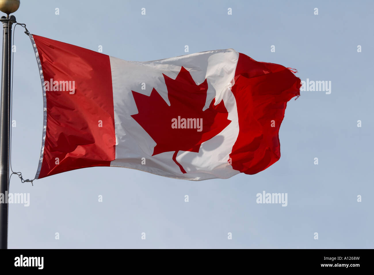 Flag Canada - Stock Image