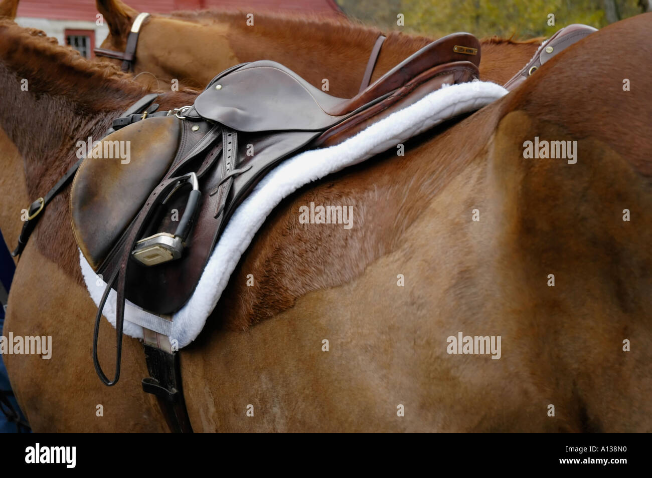 English saddle on a horse - Stock Image