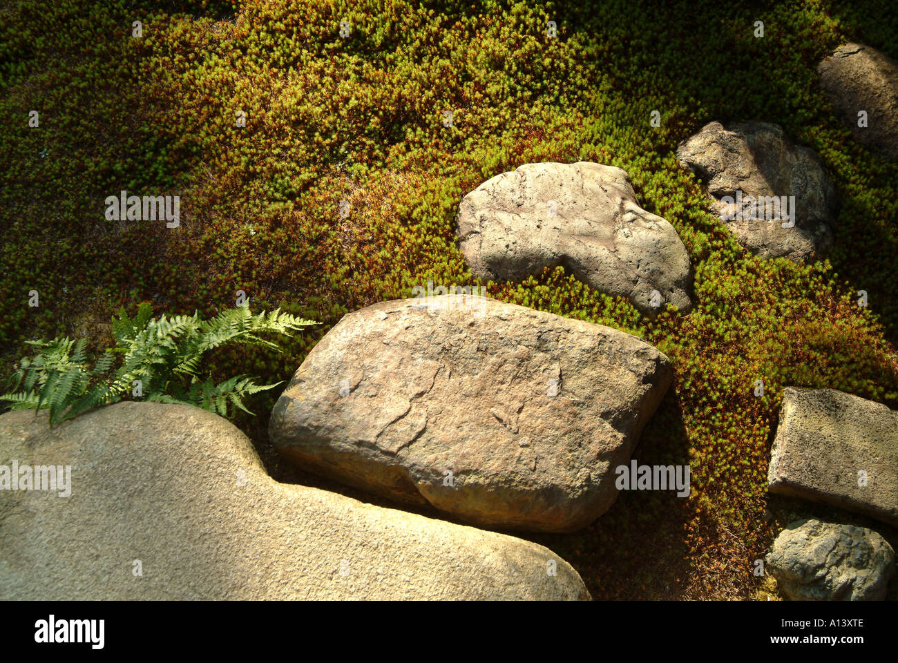 Stone steps at Zuiho-in within Daitokuji Temple Kyoto Japan - Stock Image