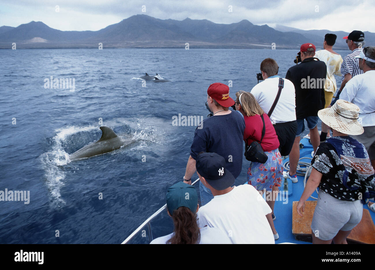 dolphin watching FUERTEVENTURA Fuerte ventura CANARY ISLANDS tourists tourism sea seaside boat - Stock Image