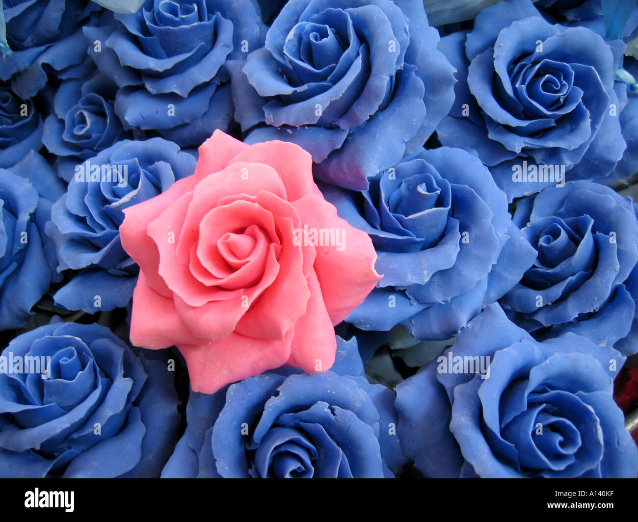 Pink Soap Rose On Bed Of Blue Roses Stock Photo 5791806 Alamy