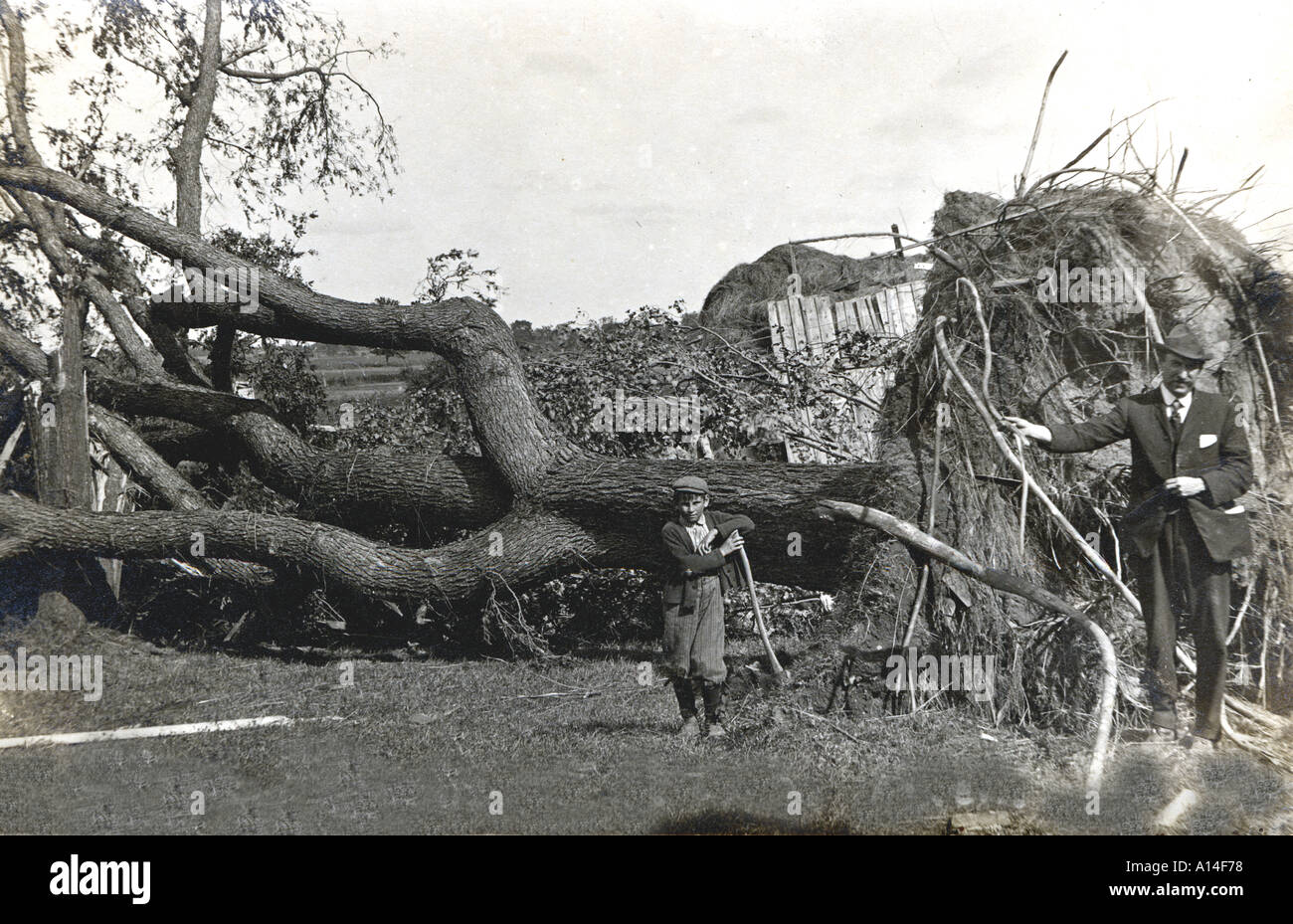 The Fallen Elm Tree - Stock Image