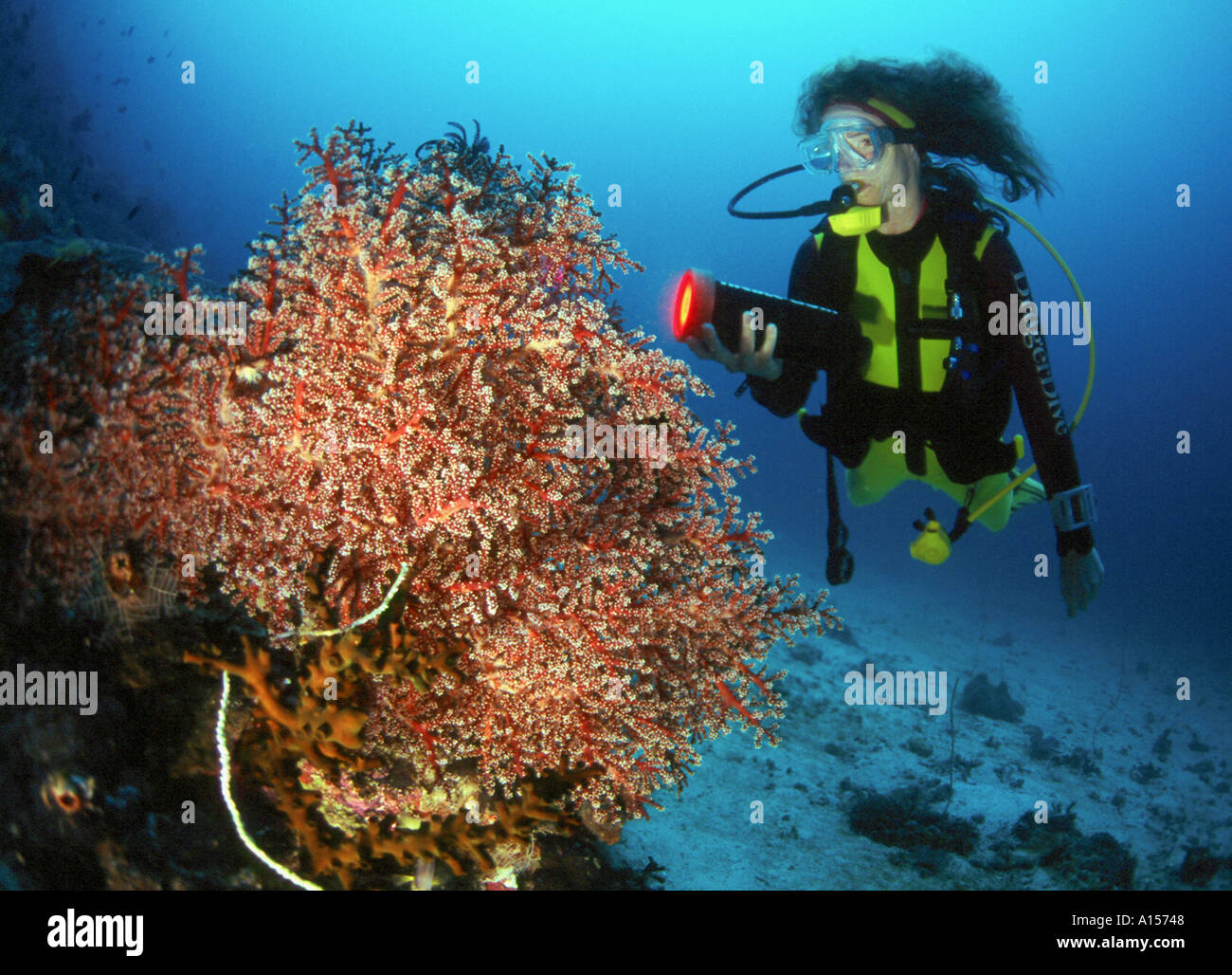 Diver beside a coral, indian ocean, Indonesia - Stock Image