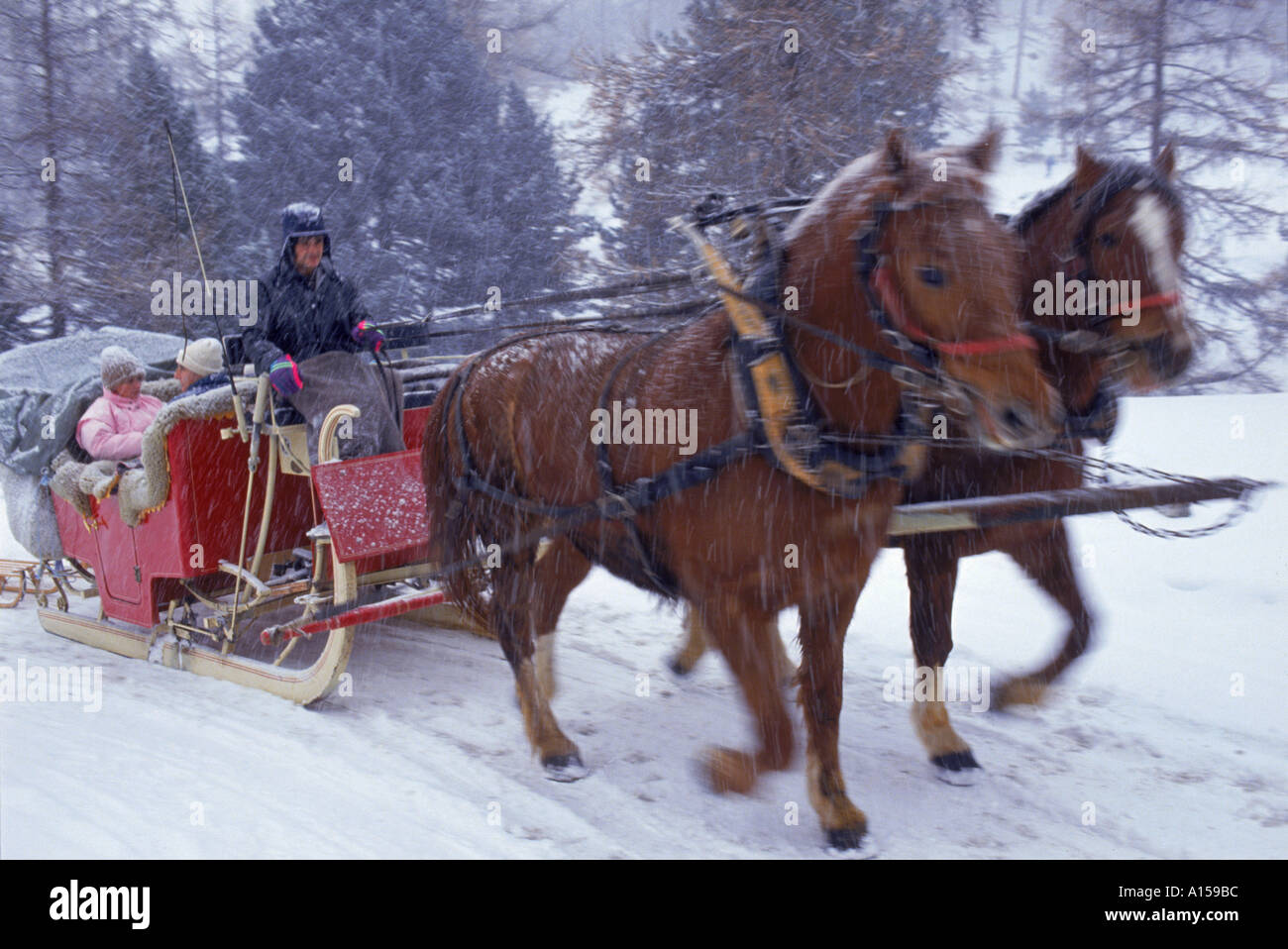 Horse drawn sleigh making for Pontressina in a snow storm in Switzerland A Woolfitt Stock Photo